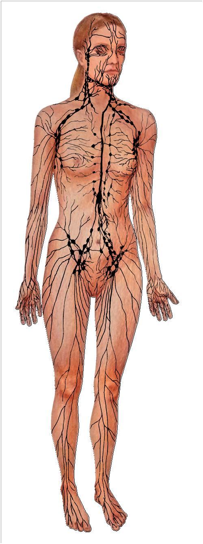 Odstranění celulitidy lymfodrenáží rozproudí váš lymfatický systém, Praha 9, Dana Clinic